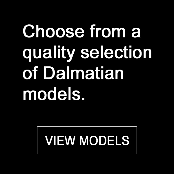 Choose from our Dalmatian models