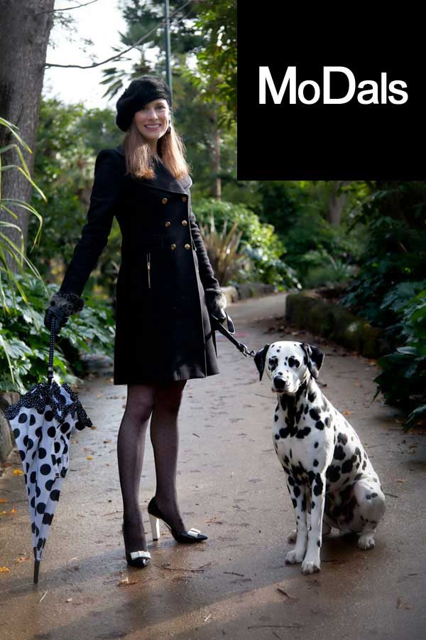 Apollo Dalmatian model fashion photo shoot