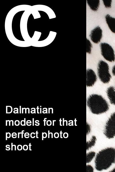 Professional Dalmatian models
