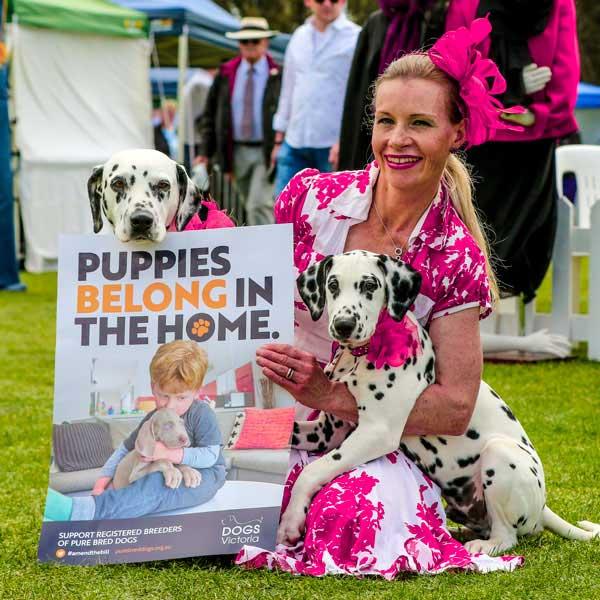 Dogs Victoria campaign