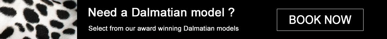Book a Dalmatian Model
