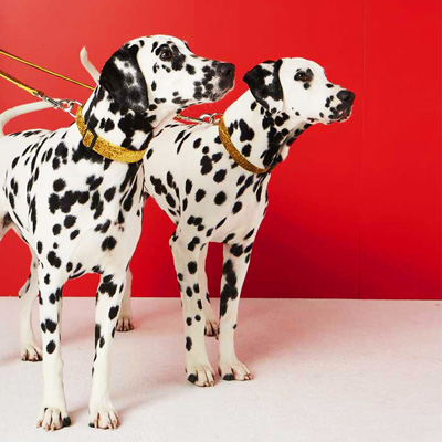 Modals dalmatian models - Seed clothing photo shoot