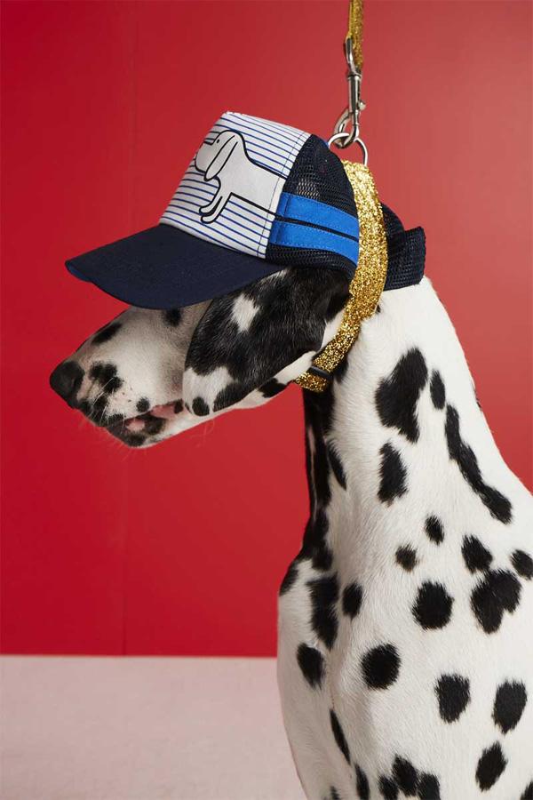 Paris Dalmatian model